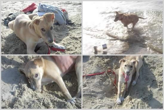 Luna at the beach